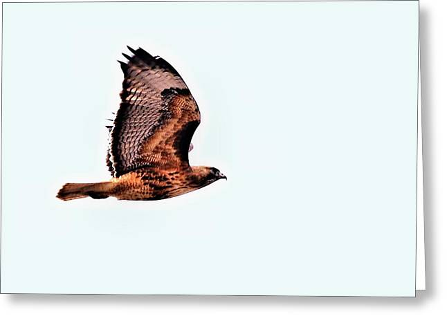 Pond In Park Greeting Cards - Hawk in Flight - 1 Greeting Card by Don Mann