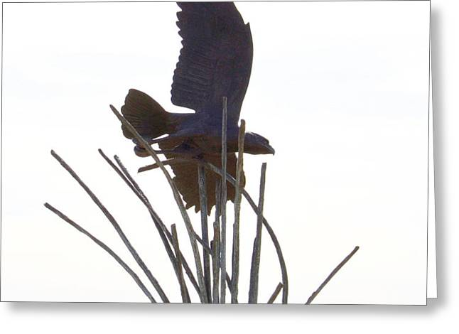 Hawk on statue Greeting Card by Rebecca Margraf