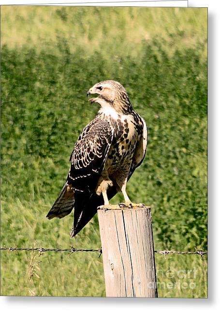 Crying Bird Greeting Cards - Hawk Warning Greeting Card by Al Bourassa