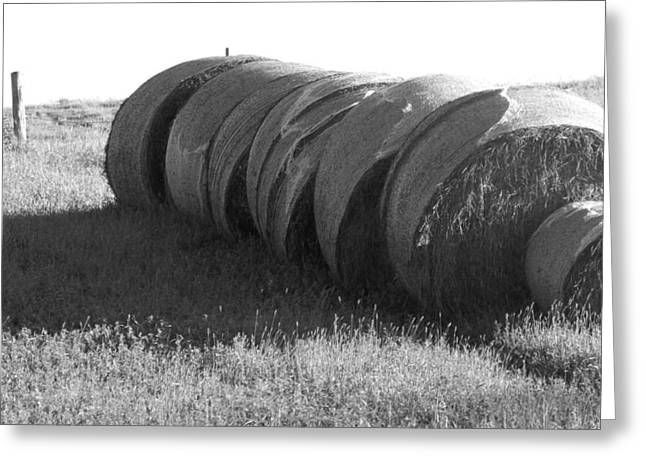 Hay Bales Greeting Cards - hAY bALES Greeting Card by Amy Bengard