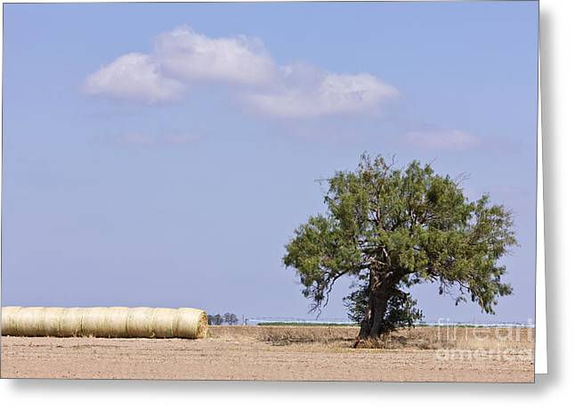 Bale Greeting Cards - Hay Bales and a Tree Greeting Card by Jeremy Woodhouse