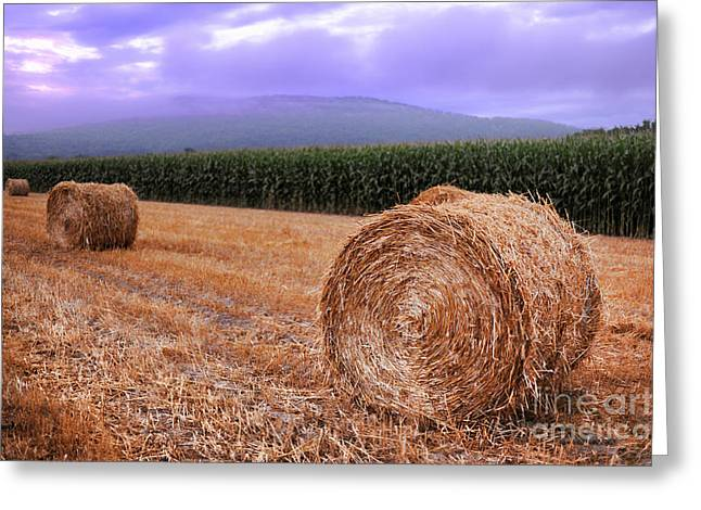 Sunrise Greeting Cards - Hay Bales At Sunrise Greeting Card by HD Connelly