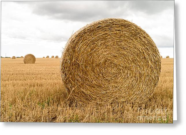 Bale Greeting Cards - Hay Bales Greeting Card by Edward Fielding