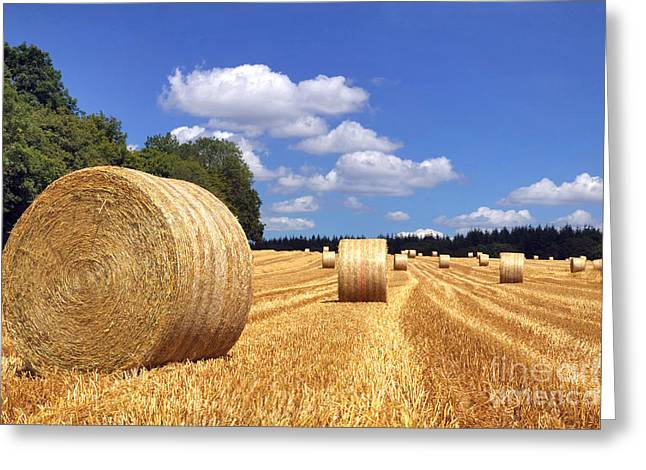 Hay Bales Greeting Cards - Hay bales in a field Greeting Card by Richard Thomas