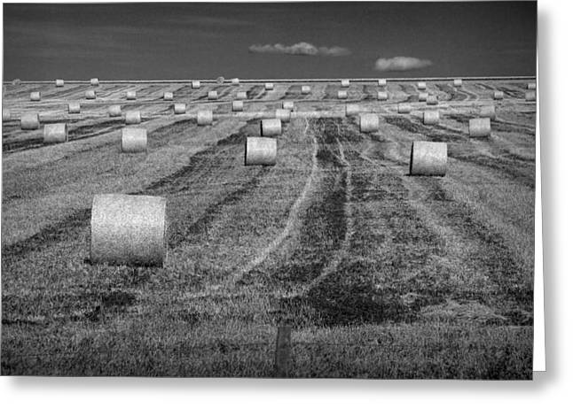 Alberta Prints Greeting Cards - Hay Bales on a Farm in Alberta Greeting Card by Randall Nyhof