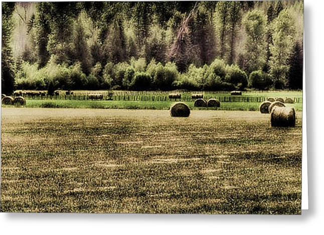 Hay Bales Greeting Cards - Hay Harvest Greeting Card by David Patterson