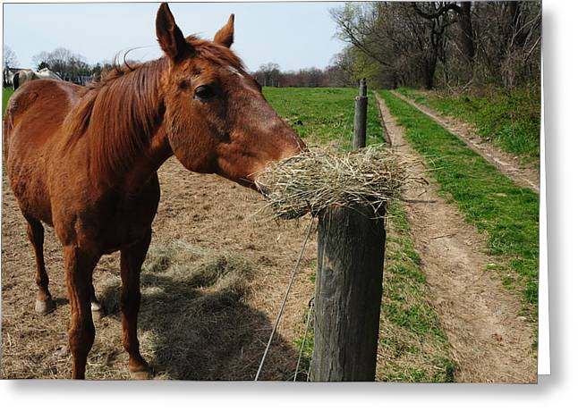 Hay Is For Horses Greeting Card by Bill Cannon