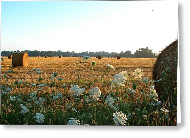 Hay Mixed Media Greeting Cards - Hay Rolls and Queen Annes Lace at Sunrise Greeting Card by Bruce Ritchie