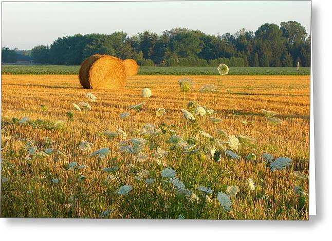 Hay Mixed Media Greeting Cards - Hay Rolls and Queen Annes Lace Greeting Card by Bruce Ritchie