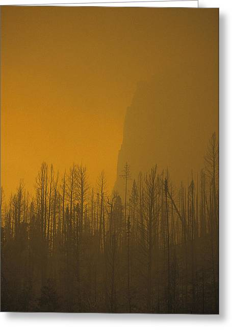 Haze Obscures Charred Pines Greeting Card by Michael S. Quinton