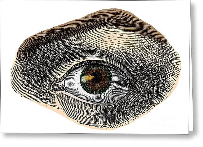 Sight See Greeting Cards - Hazel Eye Greeting Card by Science Source
