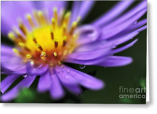 Petals With Droplets Greeting Cards - Hazy Daisy... with Droplets Greeting Card by Kaye Menner