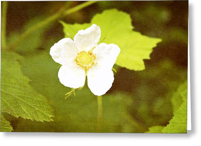 Decor Photography Greeting Cards - Hazy Nature Greeting Card by Cathie Tyler