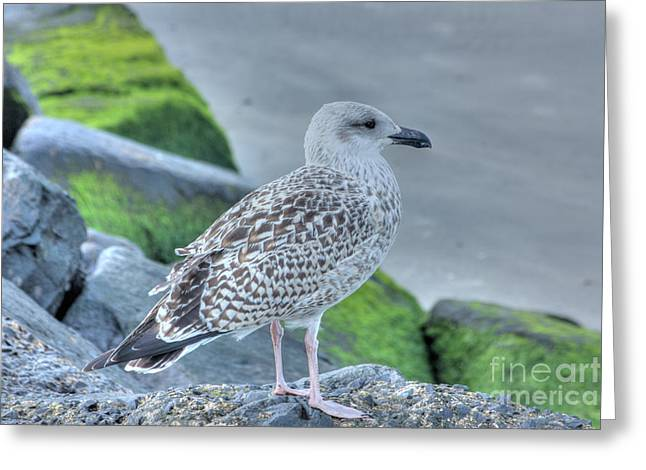 Oceanview Greeting Cards - HDR Seabird Seascape Oceanview Pictures Photos Gallery Buy Sell Selling  Bird Pics Greeting Card by Pictures HDR
