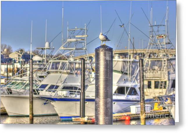 Hdr Photo Greeting Cards - HDR Seagull Boats Docked waiting to Go Greeting Card by Pictures HDR