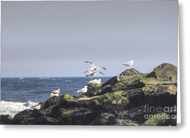 Surfing Photos Greeting Cards - HDR Seagulls at Play Greeting Card by Pictures HDR
