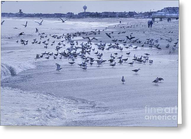 Surfing Photos Greeting Cards - HDR Seagulls at Play in the Sand Greeting Card by Pictures HDR