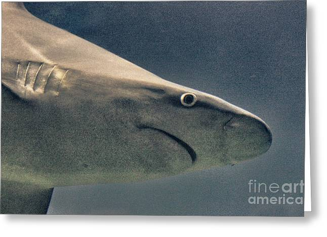 HDR Shark Ocean Sea Fish Wildlife Predator Photos Pictures Photography Buy Sell Selling Art Sealife  Greeting Card by Pictures HDR