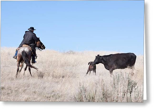 Working Cowboy Photographs Greeting Cards - Head Em Up Greeting Card by Cindy Singleton