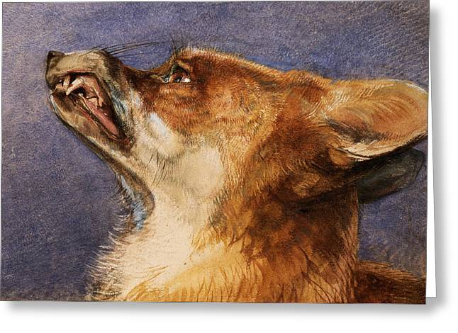 Fox Greeting Cards - Head of a Fox Greeting Card by John Frederick Lewis