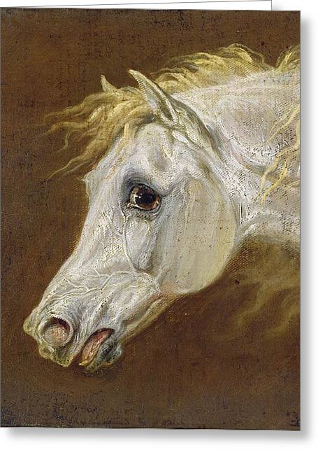 Pure Paintings Greeting Cards - Head of a Grey Arabian Horse  Greeting Card by Martin Theodore Ward