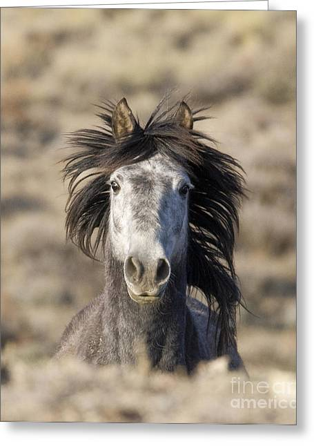 Wild Horses Greeting Cards - Head On Greeting Card by Carol Walker
