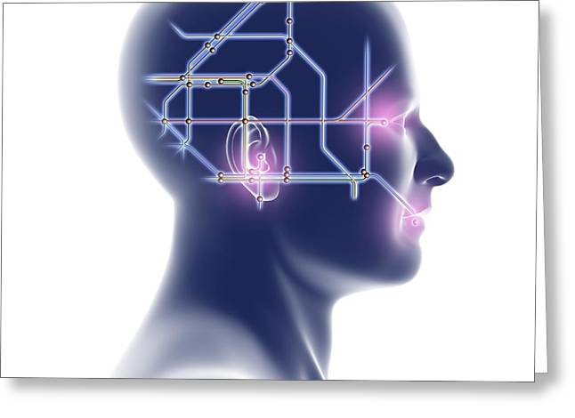 Brain Power Greeting Cards - Head With Network Diagram Greeting Card by Pasieka