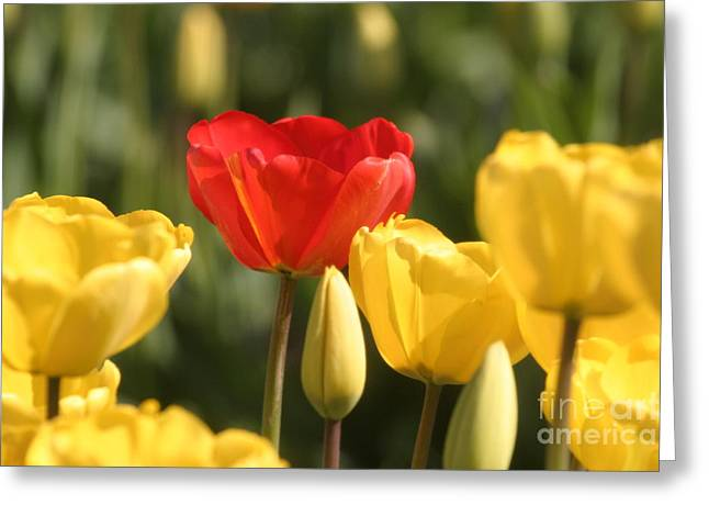 Lilies Framed Prints Greeting Cards - Heads Above the Crowd Greeting Card by Robert  Torkomian