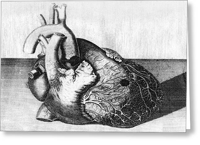 Post-mortem Greeting Cards - Heart Of King George Ii, Engraving Greeting Card by Middle Temple Library