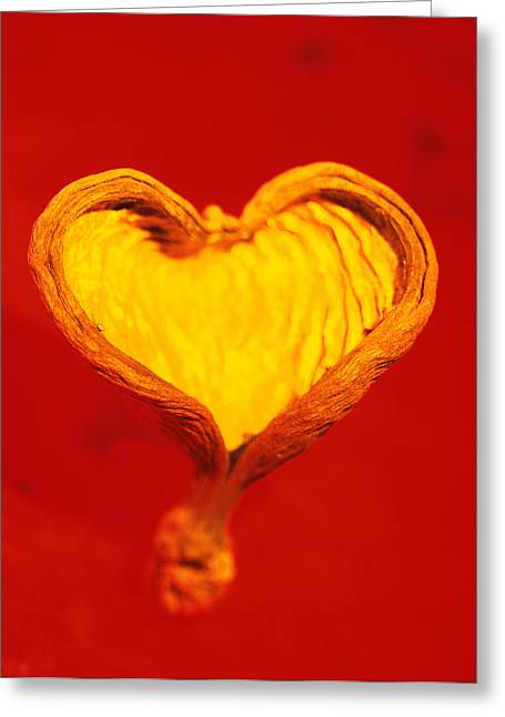 Half Shell Greeting Cards - Heart-shaped Nutshell Greeting Card by Carlos Dominguez