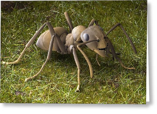 Heathland Greeting Cards - Heathland Ant, Sem Greeting Card by Power And Syred