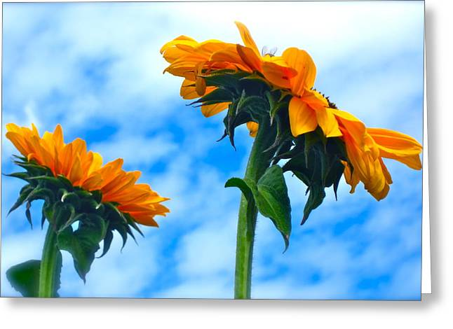 Warm Summer Greeting Cards - Heaven above ... Greeting Card by Gwyn Newcombe