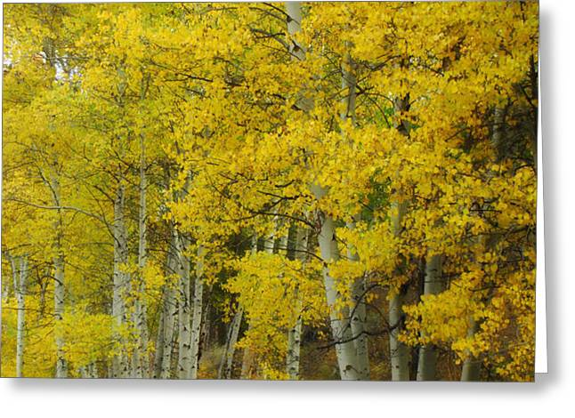 Heavenly Light Greeting Card by Donna Blackhall