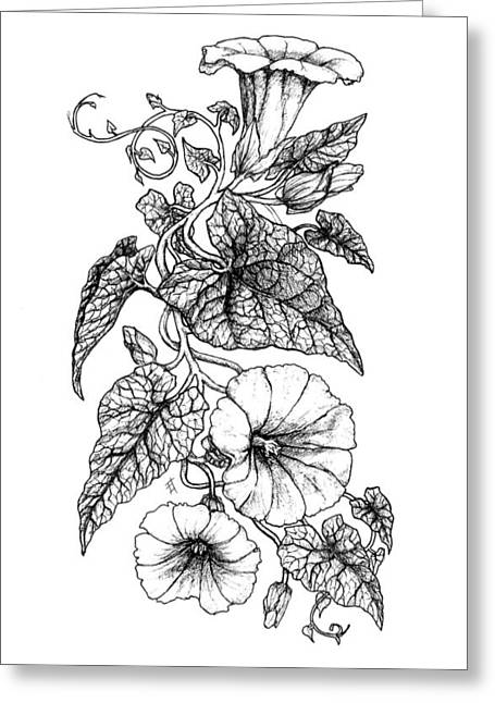 Trellis Drawings Greeting Cards - Hedge Bindweed Greeting Card by Freya Horn