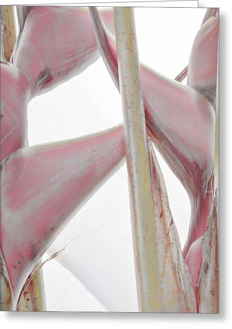 Heliconia Greeting Cards - Heliconia Series - Image 2 Greeting Card by Monte Arnold