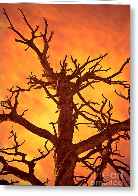 Damnation Greeting Cards - Hell Greeting Card by Charles Dobbs