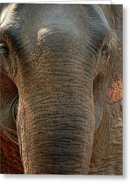 At Work Greeting Cards - Elephant In The Room Greeting Card by Bob Christopher
