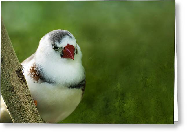 Zebra Finch Greeting Cards - Hello Cutie Greeting Card by Robin Webster