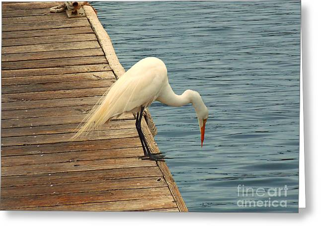 Ocean Art Photos Greeting Cards - Hello Down There Greeting Card by Methune Hively
