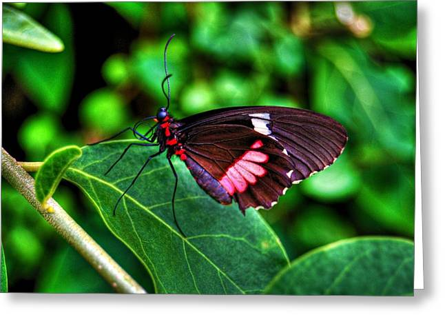 Hello Flutterby Greeting Card by Randy Aveille