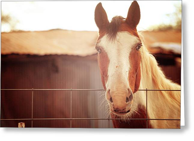 Horse Portrait Photographs Posters Greeting Cards - Hello There 2 Greeting Card by Toni Hopper