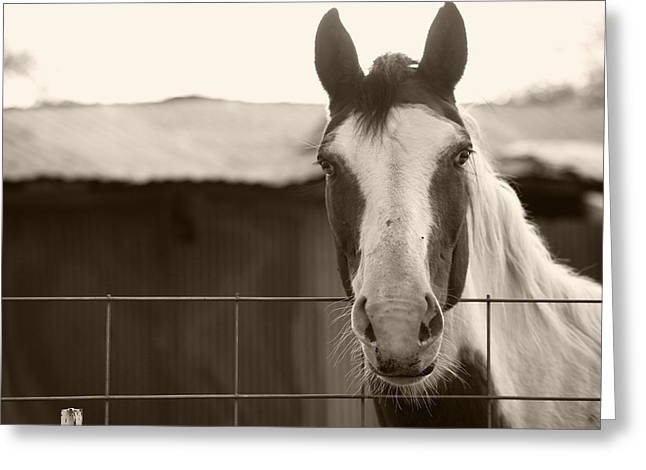 Equestrian Prints Photographs Greeting Cards - Hello there Greeting Card by Toni Hopper