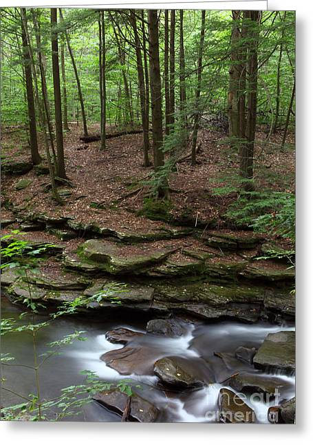Moss Green Greeting Cards - Hemlock Forest Stone Ledge and Stream Greeting Card by John Stephens
