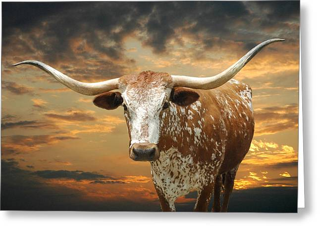 Texas Greeting Cards - Henly Longhorn Greeting Card by Robert Anschutz