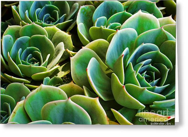 Hens And Chicks Photography Greeting Cards - Hens and Chicks Greeting Card by Methune Hively
