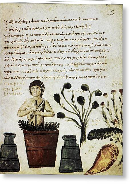 Byzantine Greeting Cards - Herbal Medicine, 10th Century Greeting Card by