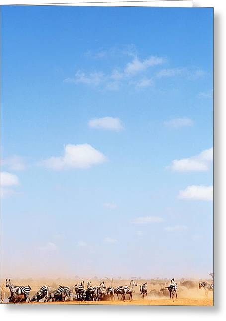 Herd Of Zebras In Dusty Scrubland Greeting Card by Axiom Photographic