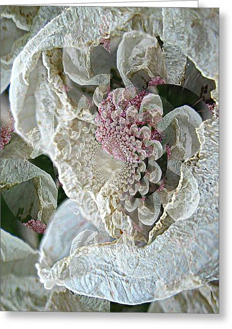 Serene Greeting Cards - Here Comes the Bride Greeting Card by Shirley Sirois