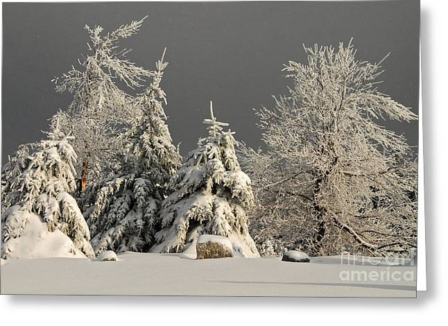 White Knob Mountains Greeting Cards - Here Comes The Sun Greeting Card by Lois Bryan