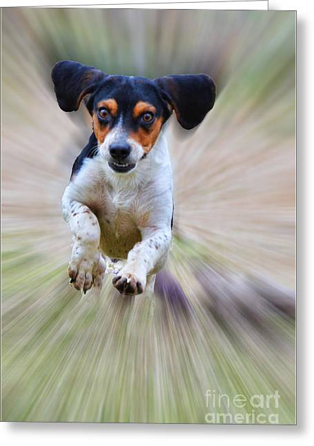 Here I Come Greeting Card by Debbie Portwood